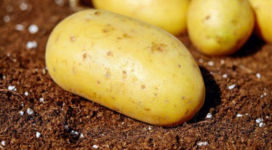 Jak posadzić ziemniaki?